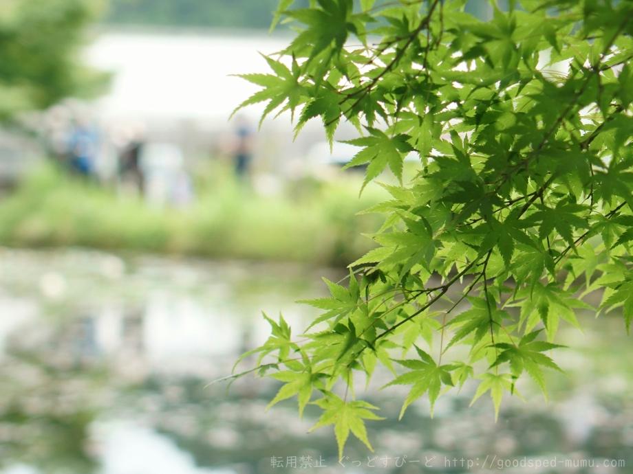 岐阜県 関市 板取のモネの池に行ってきた