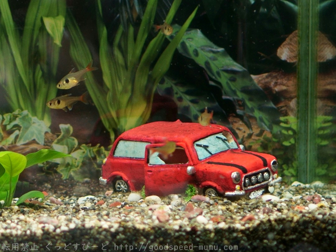 熱帯魚の飼育を再開